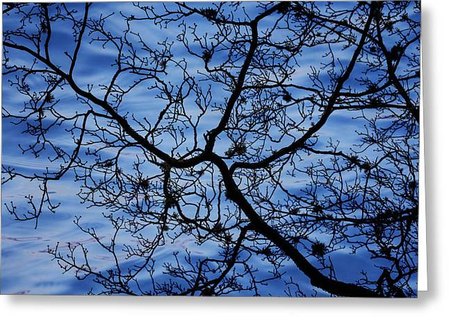 Winter Photos Greeting Cards - The Veins of Time Greeting Card by Andrew Pacheco