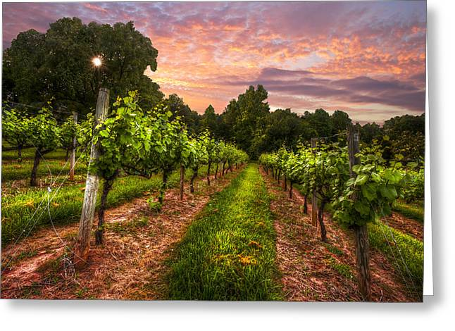 Grapevine Greeting Cards - The Vineyard at Sunset Greeting Card by Debra and Dave Vanderlaan