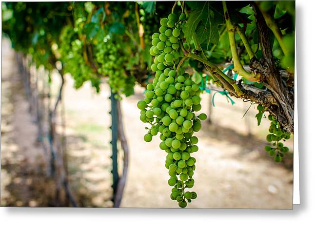 Grape Vineyard Greeting Cards - The Vineyard Greeting Card by David Morefield