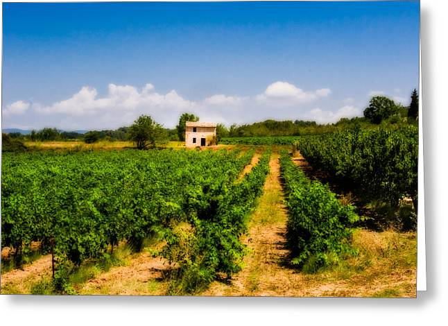Grape Vineyard Greeting Cards - The Vineyard Greeting Card by Edmund Prescottano