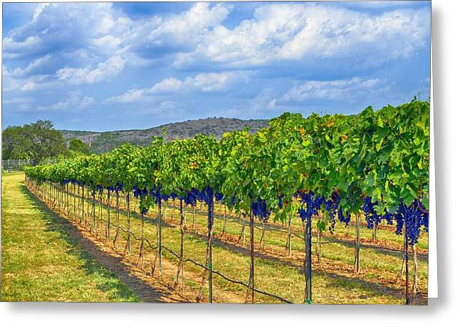 Beautiful Wine Grape Print Greeting Cards - The Vineyard in Color Greeting Card by Kristina Deane