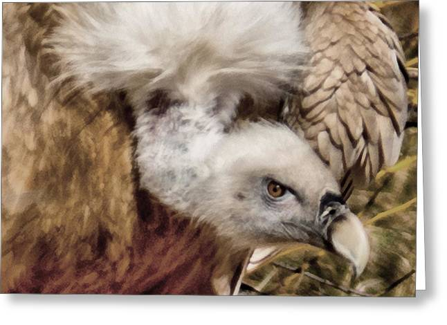 Vulture Greeting Cards - The Vulture Greeting Card by Ernie Echols