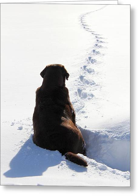 Chocolate Lab Greeting Cards - The Waiting Game Greeting Card by Davandra Cribbie