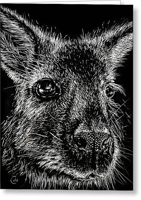 Kangaroo Drawings Greeting Cards - The Wallaby Greeting Card by Nathan Cole
