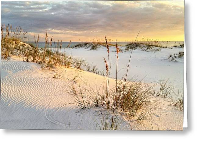 Florida Panhandle Greeting Cards - The Warmth of the Sand Greeting Card by JC Findley