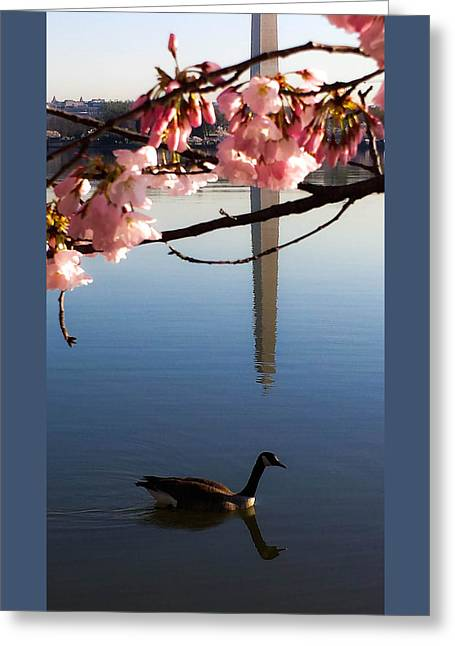 The Washington Monument Through The Cherry Blossoms Greeting Card by Debra Bowers
