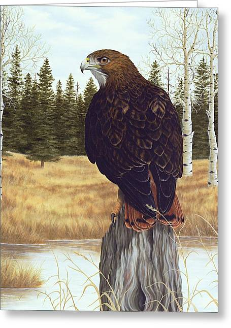 Red-tailed Hawk Greeting Cards - The Watchful Eye Greeting Card by Rick Bainbridge