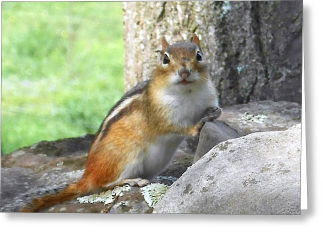 Patricia Keller Greeting Cards - The Watching Chipmunk Reclines Greeting Card by Patricia Keller