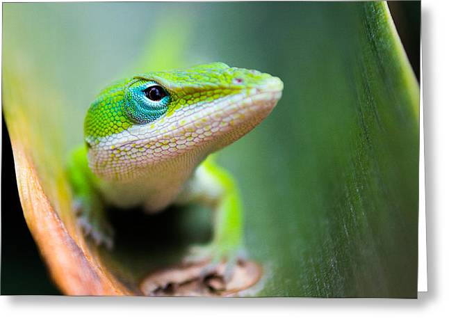Lizard Greeting Cards - The Watching Eye Greeting Card by Shelby  Young