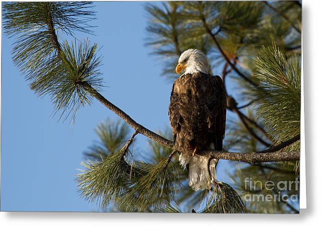 North Idaho Greeting Cards - The Watchman Greeting Card by Reflective Moment Photography And Digital Art Images