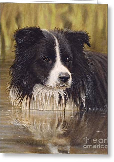 Collie Greeting Cards - The Water Baby Greeting Card by John Silver