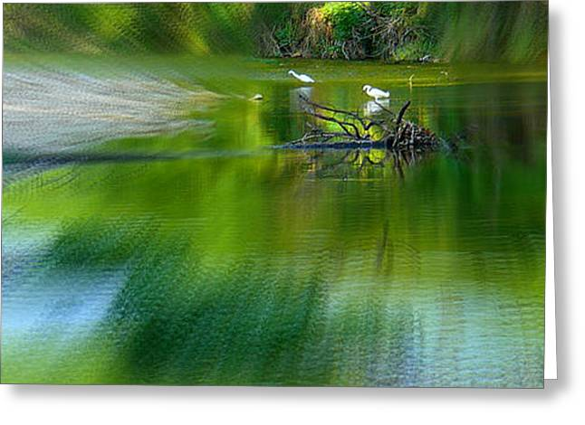 Water Fowl Greeting Cards - the WATER HOLE Greeting Card by Robert Shinn