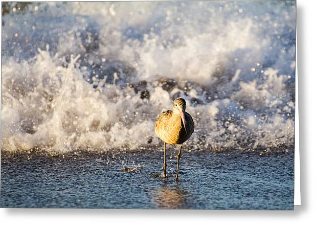 Sea Dog Framed Prints Greeting Cards - The water rushes in Greeting Card by John McArthur