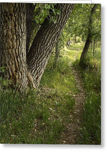 Fort Collins Greeting Cards - The Way Home Greeting Card by Michael Van Beber