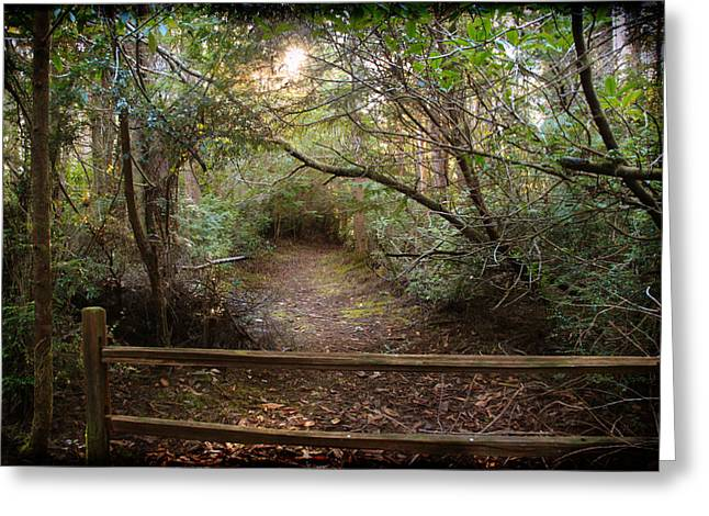 Charleston Pathway Greeting Cards - The Way to the Rabbit Hole Greeting Card by Sally Bauer