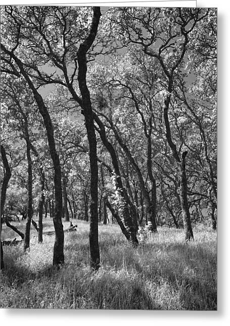 Black And White Nature Landscapes Greeting Cards - The Way You Move Me Greeting Card by Laurie Search