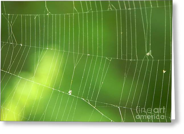 The Web Greeting Card by Roman Milert