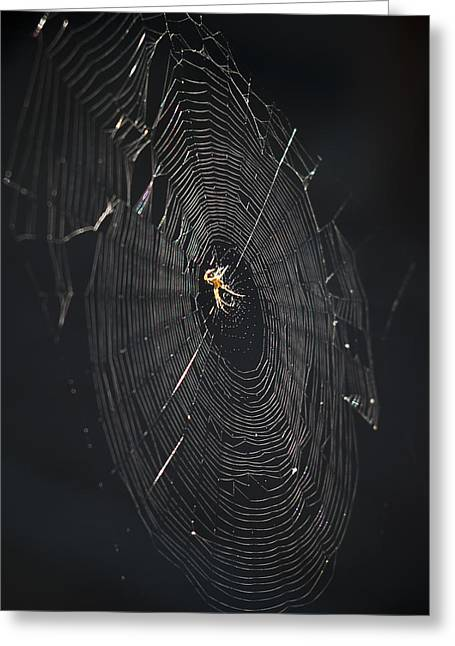Ron Roberts Photography Framed Prints Greeting Cards - The Web Greeting Card by Ron Roberts
