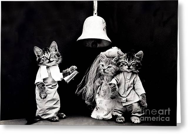 House Pet Greeting Cards - The Wedding in 1914 Greeting Card by Science Source