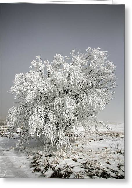 Snowstorm Photographs Greeting Cards - The Weight of Winter Greeting Card by John Haldane