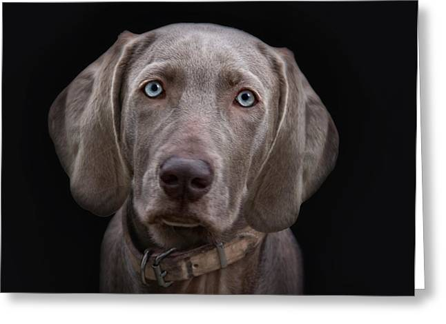 The Weimaraners Sister Greeting Card by Joachim G Pinkawa