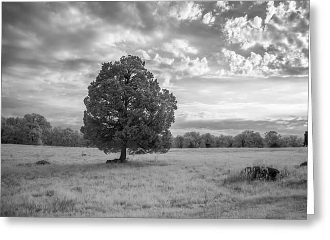 Civil War Site Greeting Cards - The Wheatfield 8D00091 Greeting Card by Guy Whiteley