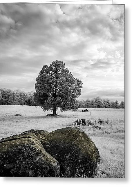 Civil War Site Greeting Cards - The Wheatfield 8D00094 Greeting Card by Guy Whiteley