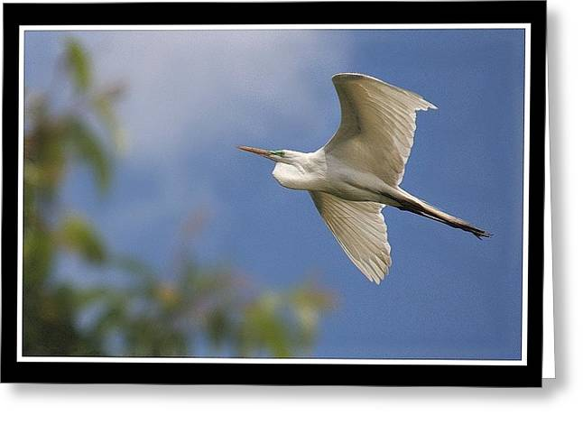 Stein Greeting Cards - The White Egret. Greeting Card by Valerie Stein