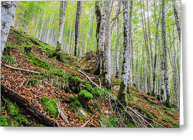 Green Day Greeting Cards - The white forest Greeting Card by Tilyo Rusev