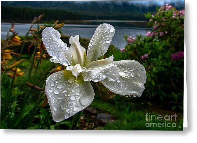 Family Time Greeting Cards - The White Iris Greeting Card by Robert Bales