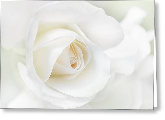Flower Blossom Greeting Cards - The White Rose Flower Greeting Card by Jennie Marie Schell