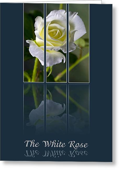 Sarah Christian Greeting Cards - The White Rose Greeting Card by Sarah Christian