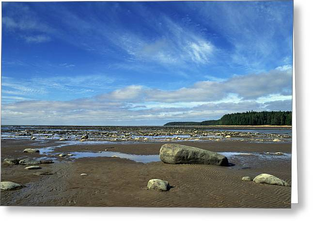 On The Beach Greeting Cards - The White Sea Greeting Card by Anonymous