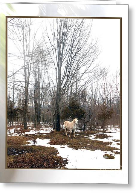 Paso Fino Stallion Greeting Cards - The White Stallion on a Snowless  Mound Greeting Card by Patricia Keller