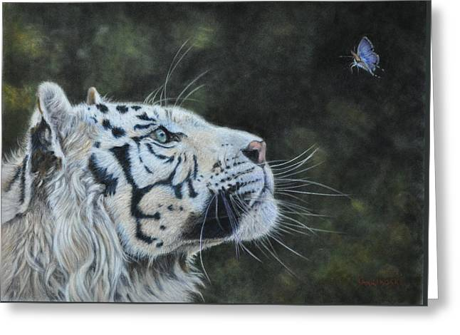 Nature Study Greeting Cards - The White Tiger and the Butterfly Greeting Card by Louise Charles-Saarikoski