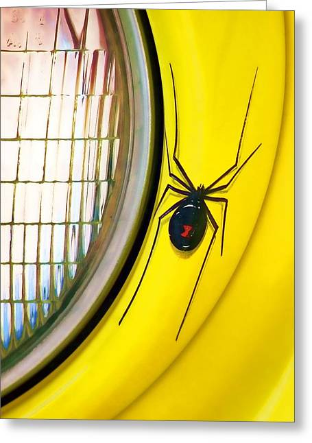 Black Widow Photographs Greeting Cards - The Widow and the Light Greeting Card by Nikolyn McDonald