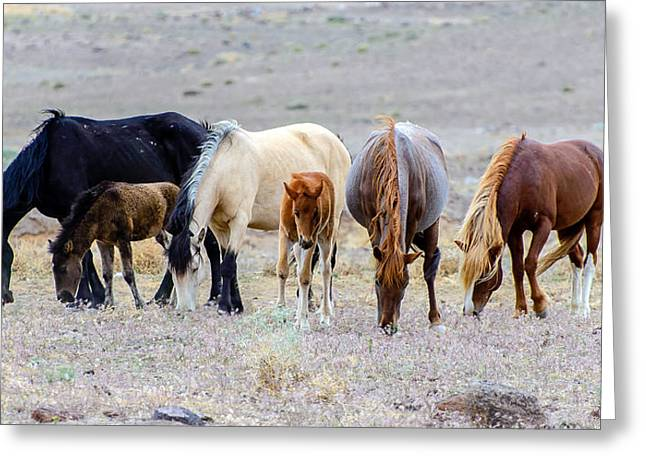 Wild Horses Greeting Cards - The Wild Bunch Greeting Card by Mike Ronnebeck