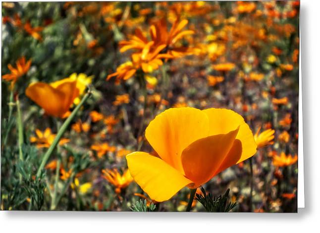 Lucinda Walter Greeting Cards - The Wildflowers are Here and Spring Has Arrived Greeting Card by Lucinda Walter