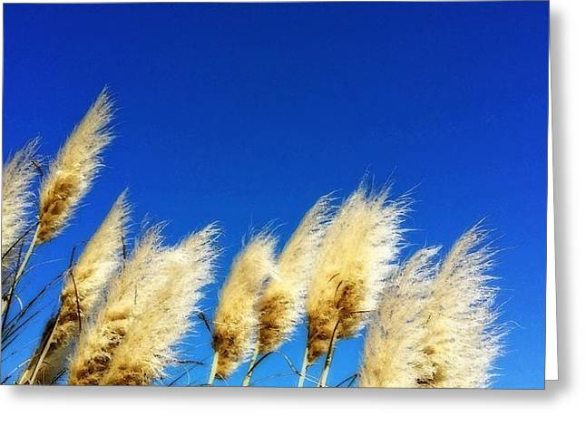 Pampas Grass Greeting Cards - The Wind Gatherers - Sea Grass Art By Sharon Cummings Greeting Card by Sharon Cummings