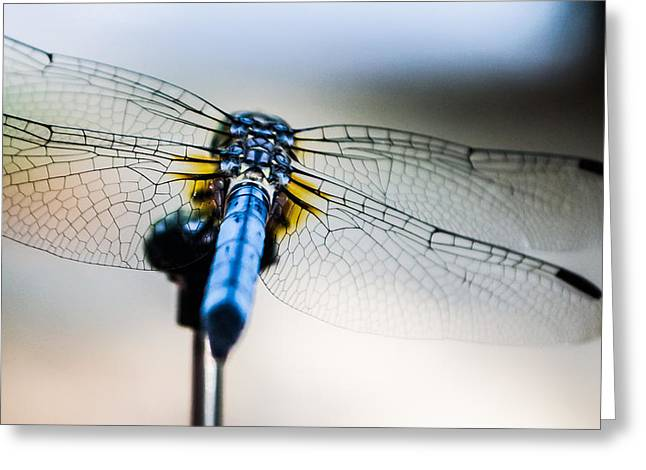 Dragonflies Greeting Cards - The Wings of a Dragonfly Greeting Card by Shelby  Young
