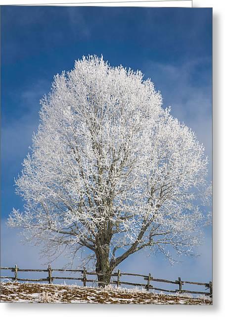 Snowstorm Photographs Greeting Cards - The Winter Sentry Greeting Card by John Haldane
