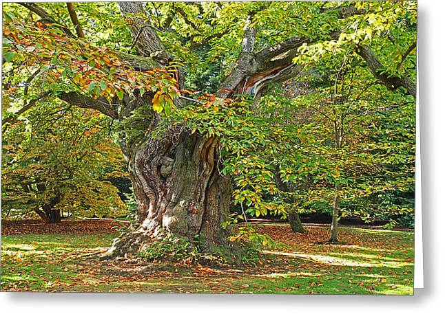 Sacred Artwork Greeting Cards - The Wise Old Tree Greeting Card by Gill Billington