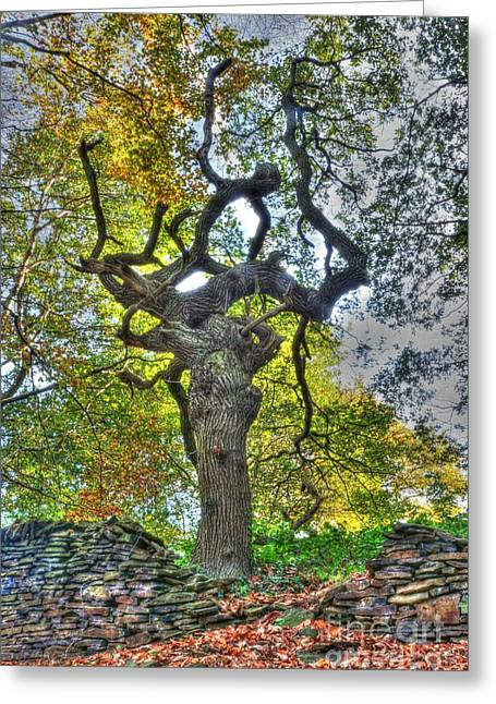 David Birchall Greeting Cards - The Witches Tree Greeting Card by David Birchall
