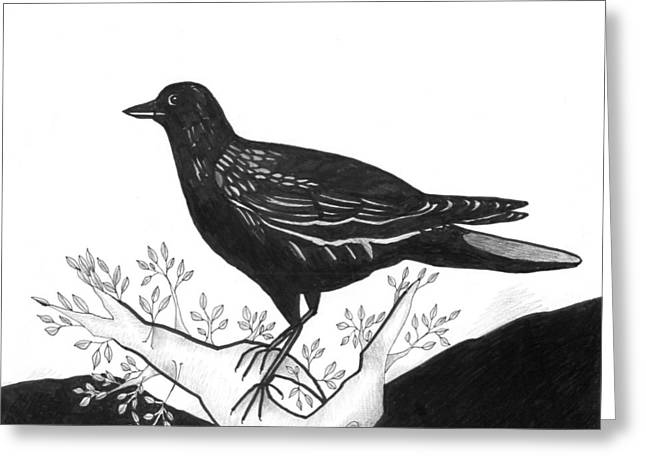 Bird On Tree Drawings Greeting Cards - The Witness Greeting Card by Helena Tiainen
