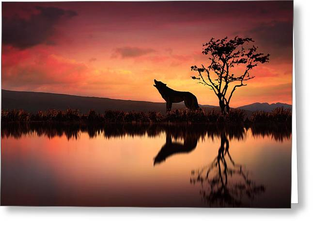 The Wolf At Sunset Greeting Card by Jennifer Woodward