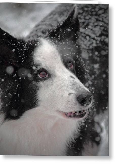 Collie Mixed Media Greeting Cards - The Wonder of Snow Greeting Card by Melanie Melograne