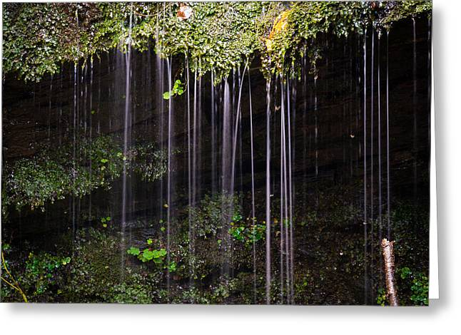 Flowing Greeting Cards - The Wonders Of The Forest. Greeting Card by Daniel Kay