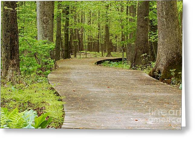 The Wooden Path Greeting Card by Patrick Shupert