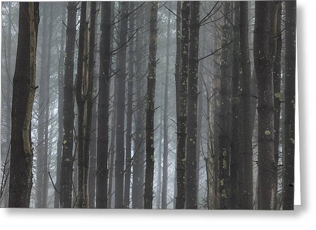 The Woods Greeting Card by Bill  Wakeley