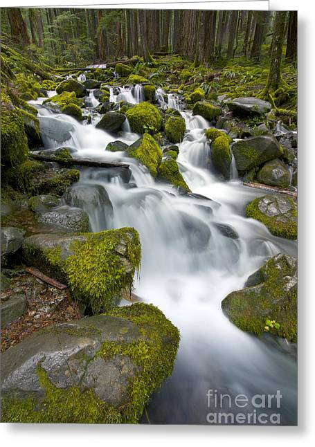 Running Water Greeting Cards - The woods trail Greeting Card by Marco Crupi